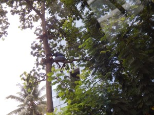 Safe tree branch cutting 101